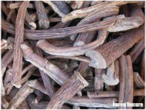 lincura koren je izuzetan prirodni lek