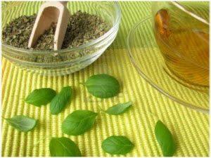 majoran začinska biljka