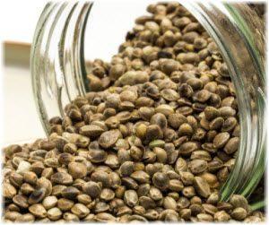 semena konoplje u ishrani