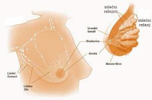 simptomi raka dojke