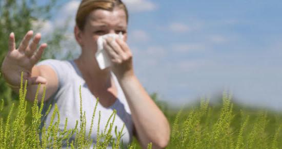 simptomi alergije na ambroziju