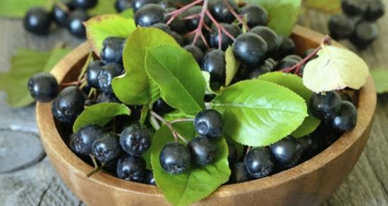 sibirska aronija lekovita svojstva i upotreba