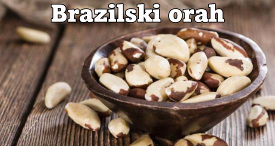 orah iz brazila (1)
