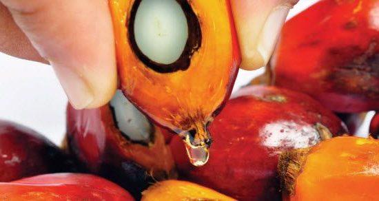 zdravi recepti sa palminim uljem