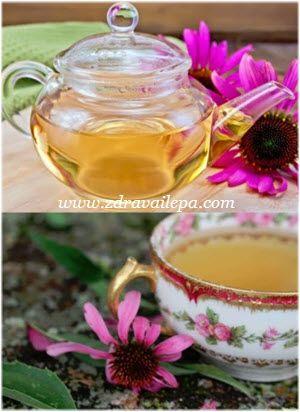 kako se pravi ehinacea čaj