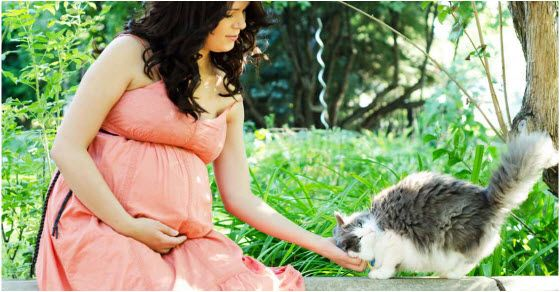 toksoplazmoza u trudnoći koliko je opasna